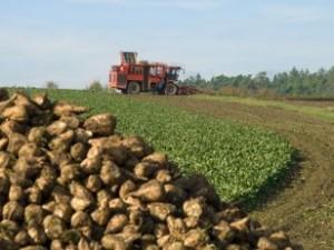 Sugar Beet Harvest