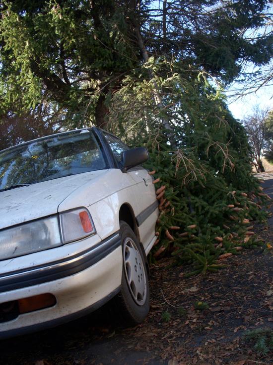 Tree grazes car